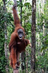 Indonesien (Copyright Jysk Rejsebureau)