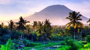 Rismark og vulkan  på Bali (EK)